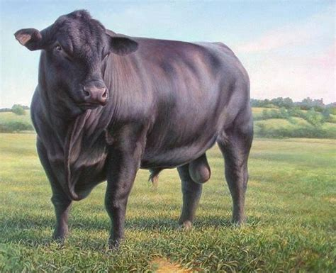 CATTLE: Black Angus Bull Standing on One 16 inch Fabric Panel