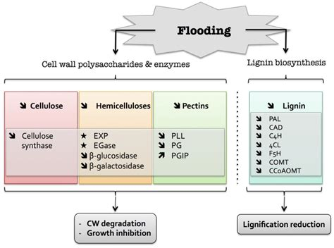 Plants   Free Full-Text   Cell Wall Metabolism in Response