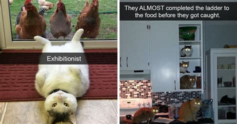 20 Hilarious Photos Of Cats That Will Make You Laugh Way